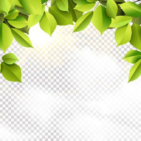 eps vector illustration with green leaves tree foliage and realistic transparent sky clouds outdoor background Çizim