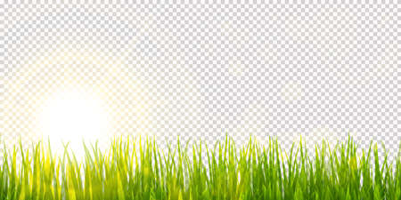 eps vector background template file of panorama green grass on lower side with sun beams for summer or spring designs with transparency effect in vector file