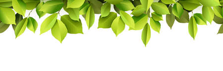 vector illustration with realistic green leaves tree foliage and white panorama background Çizim
