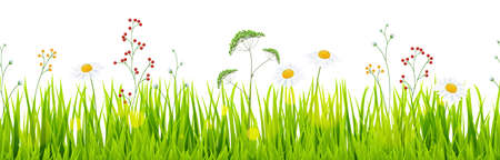 Background template file of seamless panorama green summer grass on lower side with daisies for summer or spring designs