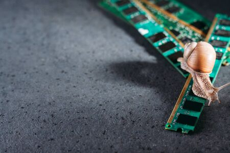 Snail on the slats of RAM. Old obsolete memory. Slow RAM. Computer components. Dark background. Foto de archivo