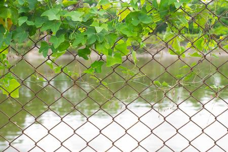 creeper on fence Zdjęcie Seryjne