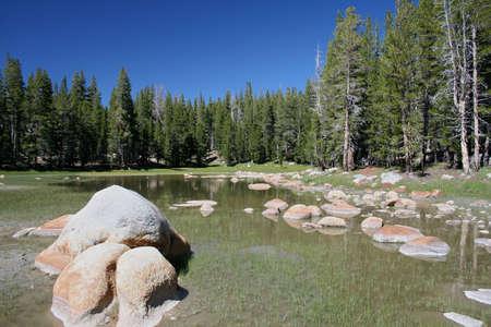 murky: Pond at Yosemite