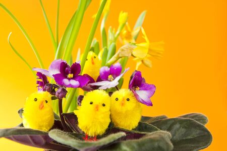 Chicks on Flowers Easter Setting Stock Photo