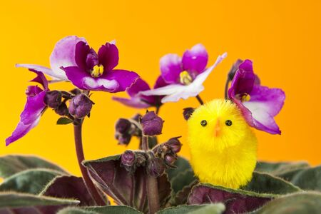 Chick on Flower Easter Setting