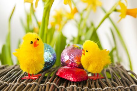 Easter egg Setting with Narcissus and Decoration Chicks Stock Photo