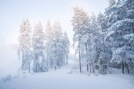 Snow Covered Woods Stock Photo
