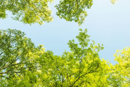 Low Angle View on Green Foliage Against Blue Sky