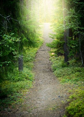 sunlit: Path in Green Woods Lit by Setting Sun Stock Photo