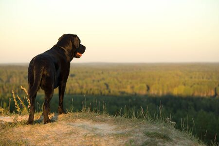 Black Lab Standing on Edge of a Hill. Focus on Foreground and Dog.