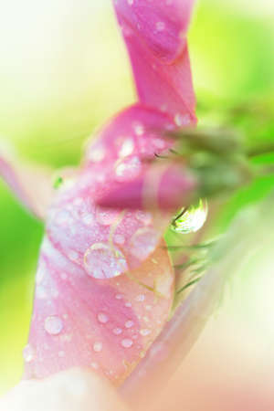 Beautiful flower closeup with water drops Stock Photo