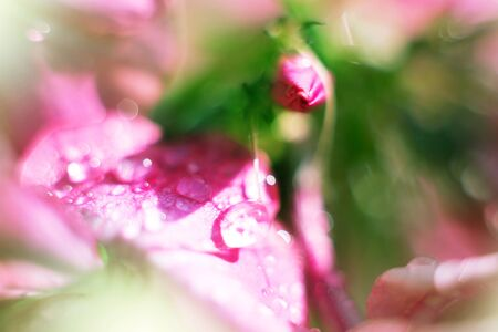 Abstract flower closeup with water drops Stock Photo