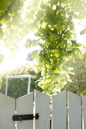 녹색 성장 익은 사과 정원 성장 입구