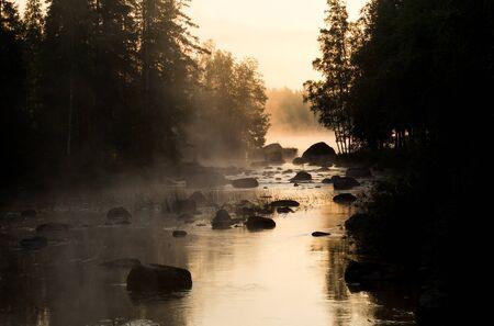 황금빛 햇빛 조명 다크 우드 사이의 강