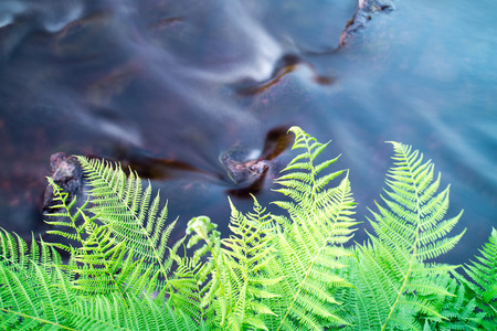 Fern Leaves Reaching Over Flowing Water