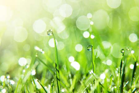 젖은 번쩍이는 잔디의 근접 촬영