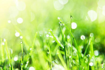 Close-up of Wet Sparkling Grass