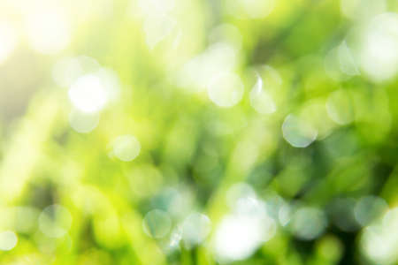 Green Bokeh Background of Wet Sparkling Grass