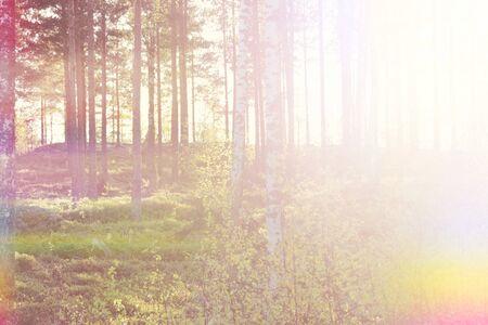 Bright Warm Summer Woods