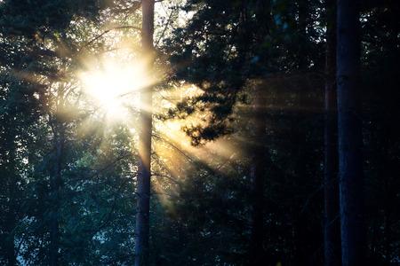 Bright Sunlight Bursting Through Dark Woods 스톡 콘텐츠