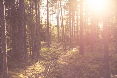 Path Leading Through Woods and Early Morning Sun Shining