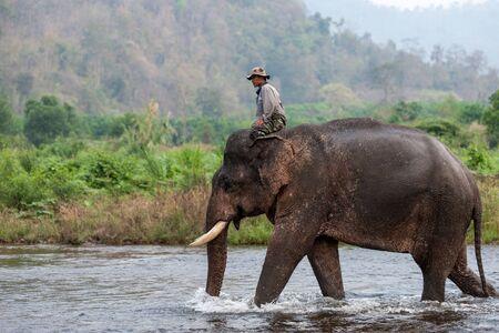 thai elephant: Kanchanaburi, Thailand - February 27, 2011: Unidentified mahout rides his elephant walking in the shallow river.