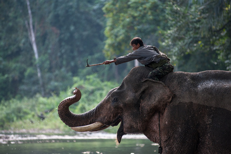 mahout: Kanchanaburi, Thailand - February 27, 2011: Unidentified mahout tames and plays with his elephant raising its trunk.
