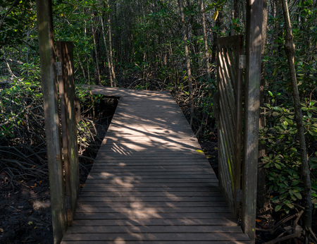 Gates of the wooden path into the dark mangrove forest. photo