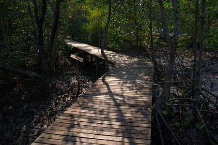 Wooden path partly lit by sunlight in the mangrove forest. photo