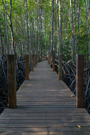 Wooden walkway in the dark mangrove forest with branches and roots of trees. photo