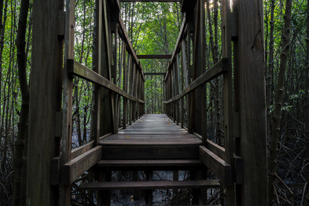 Old wooden bridge in the mangrove forest photo