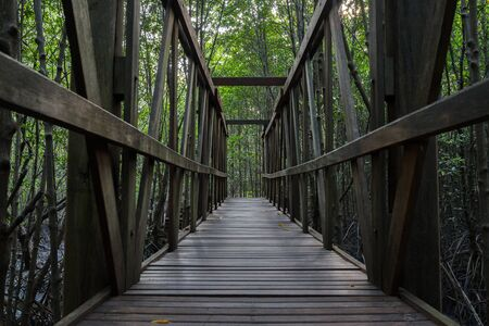 Old wooden bridge in the green mangrove forest photo