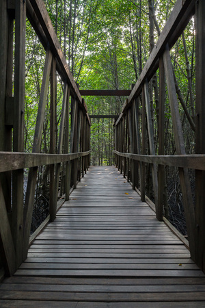 Old wooden bridge in the mangrove forest. photo