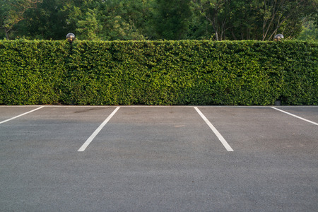 Empty asphalt car park with green foliage wall and trees in the background. Stock Photo