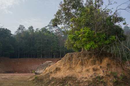 landslip: Trees on small hill caused by landslip with small cliff and forest in the background.