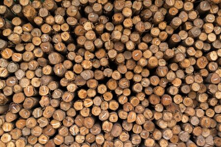 treated: Pattern of stack of rough sawn timber.