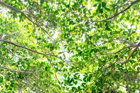 brightly: Green background of brightly lit tree leaves and branches.