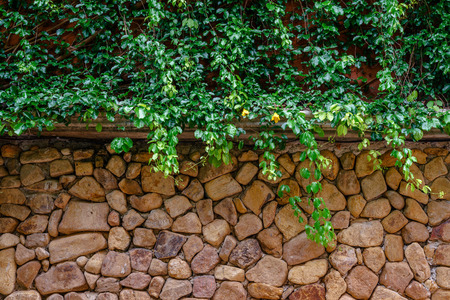 Green ivy covering brown stone wall.