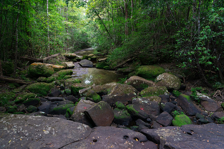 Stones covered with dried leaves and green moss with small creek in the forest. Stock Photo