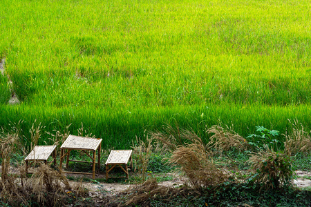 Bamboo table and chairs on small dirt road near green rice farm.