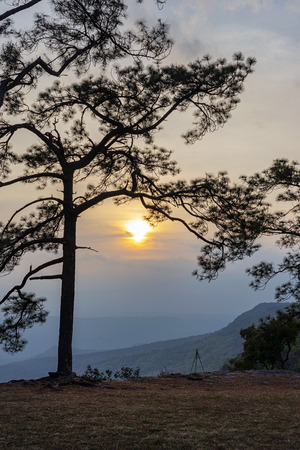 Silhouette of pine trees and camera tripod with mountain and sunset background.
