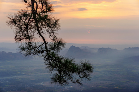 Silhouette of pine tree branches with orange sunrise and dark mountains background in Phu Kradueng, Loei, Thailand.