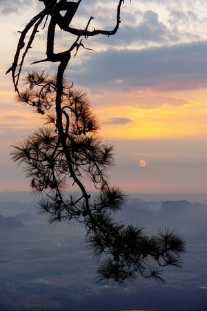 Silhouette of pine tree branches with mountain sunrise background in Phu Kradueng, Loei, Thailand.