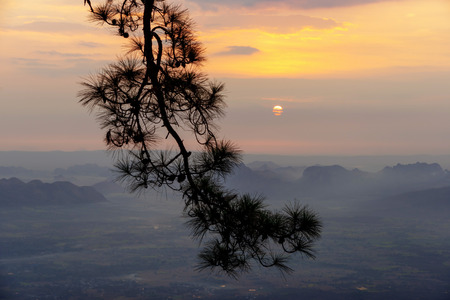 Silhouette of pine tree branches with sunrise over mountain range and agricultural plain background in Phu Kradueng, Loei, Thailand. 版權商用圖片
