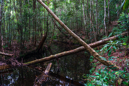 Broken trees on the small river with red dry leaves in the green forest.