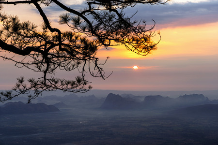 Silhouette of pine tree branches with mountain range sunrise background.