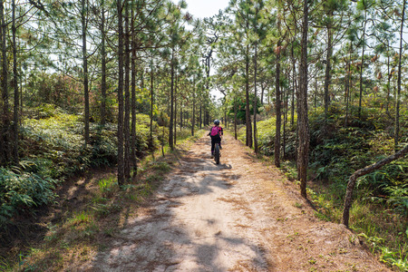 Asian female cyclist cycling on small dirt road through green pine forest on the mountain. 版權商用圖片