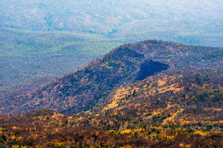 Abstract of colorful trees in the forest, mountain and cliff near Phu Kradueng, Thailand.