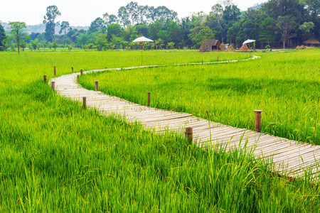Bamboo bridge across green rice field with small huts and haystacks.