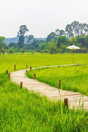 Bamboo bridge across green rice field with tree line and white sky in the background.